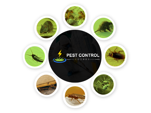 Pest Control Coombs