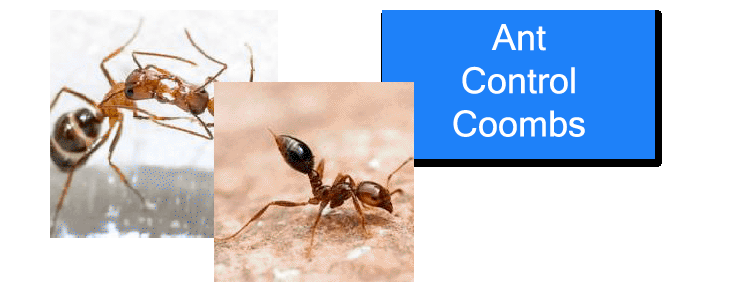 Ant-Control-Coombs